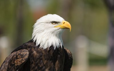 Bundy Didn't Just Seize My Bird Refuge